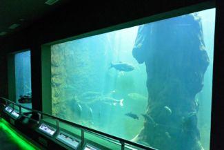 a Tisza-tavi Ökocentrum egyik akváriuma