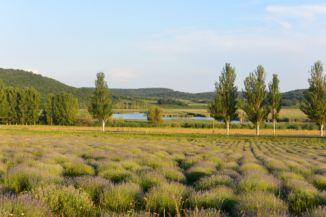 levendulamező és a Külső-tó