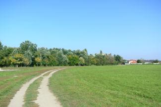 Boglárkertész utca