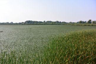 Tisza-tavi Vízi Sétány és Tanösvény - kilátás a tóra