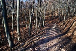 útkanyar a Meszes-bükk nevű bükkös erdőrészben