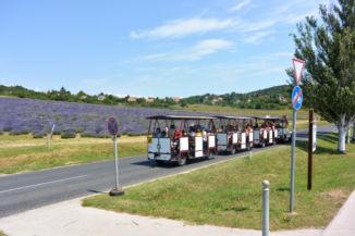 városnéző vonat halad el a levendulás mellett