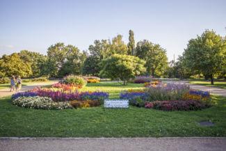 virágba borult Jubileumi park