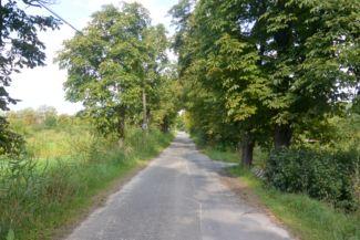 vadgesztenyefa-sor a Poprádi úton
