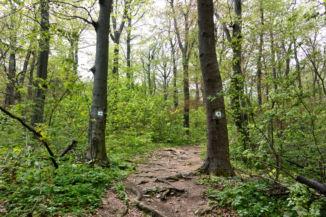 zöld kereszt jelzésű turistaút a Két-bükkfa-nyeregnél