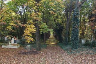 borostyánnal benőtt fák között vezetnek a temetőben az utak