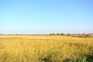 kilátás a Borzaspusztai romtemplom környékén