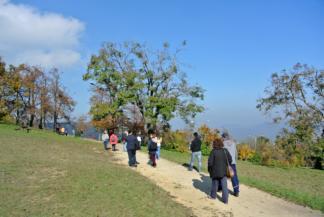 őszi séta a Normafánál