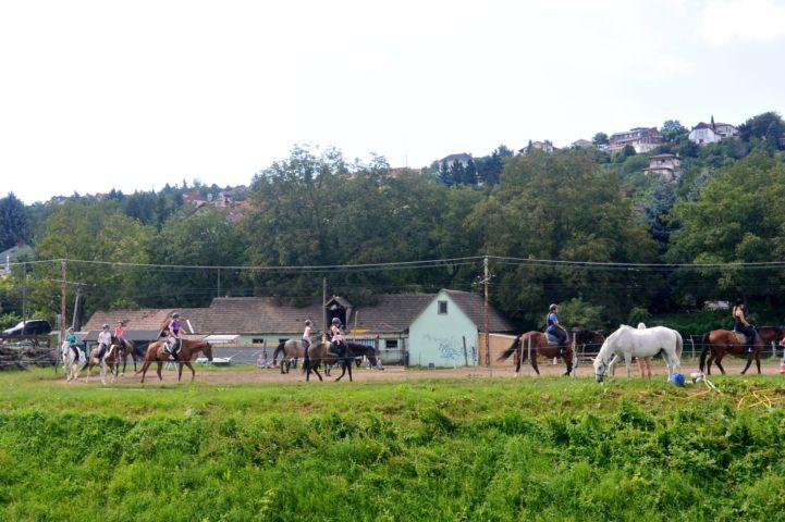 lovalgatás egy Kapolcs utca melletti lovardában
