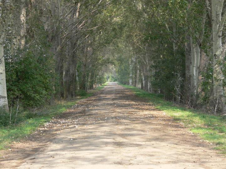 Károly-majori út