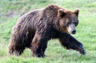 medve a Medveotthonban