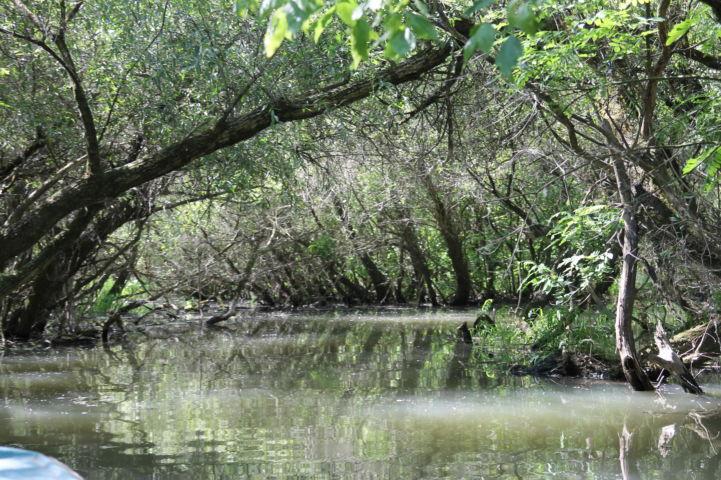 keskeny vízi ösvény benőtt fákkal