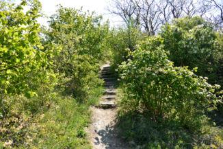 Esztergomból a Kis-Kúria-hegyre vezető turistaút