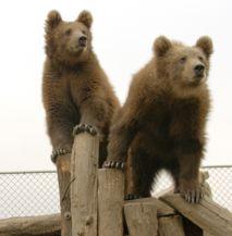 macibocsok a Medveotthonban
