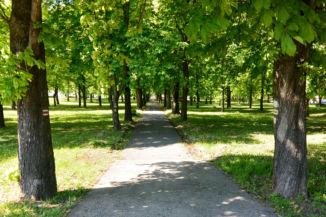 a Csalamádé temető vadgesztenyefasoros sétaútja