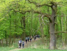 BogyóLászó, Gerecse50: Be az erdőbe (a Cartographia Kupa 2015 fotópályázatából)