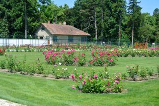 a szivárvány színben pompázó rózsakert