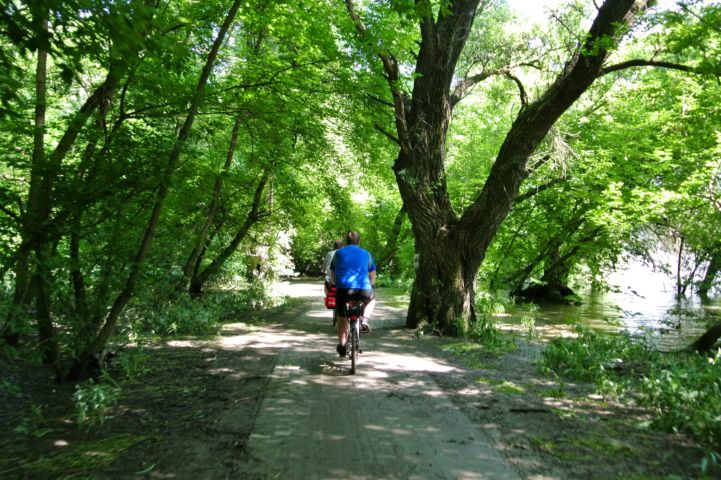 bike path through the floodplains forest