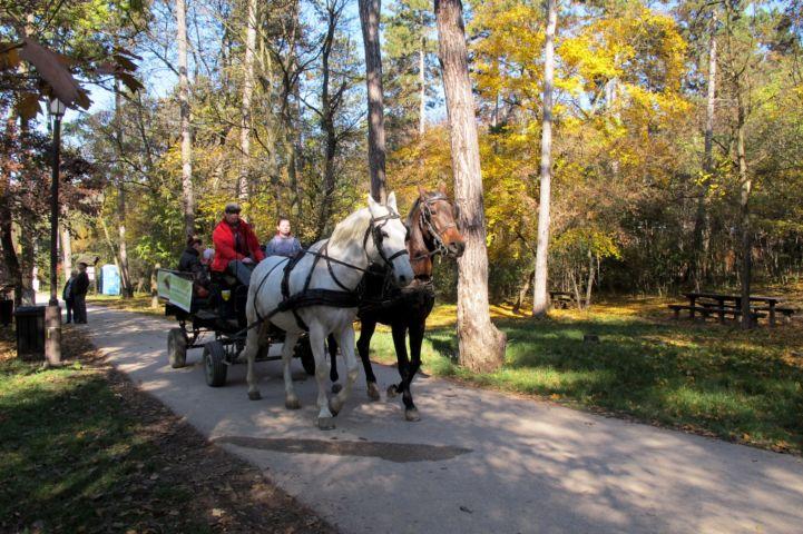 lovaskocsiztatás