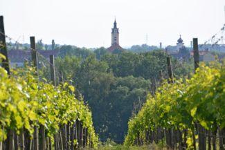 Bicske templomai a Galagonyás szőlősorai között nézve
