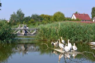 pelikánok az Ökocentrumban