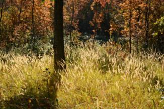 szép őszi színek az erdőben