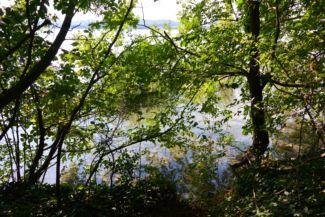 érintetlen Balaton-part a sajkodi strandtól Tihany felé vezető erdei út mellett