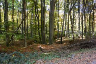 szép kilátás nyílik az útról az erdőbe