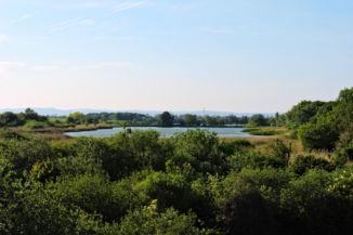 kilátás a Töreki Halastavak felé a Tóközi madármegfigyelő toronyból
