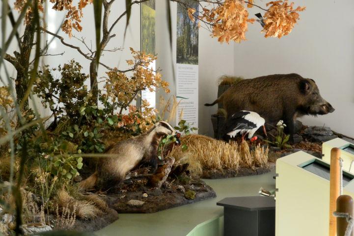 preparátumok a Természet Háza Látogatóközpontban