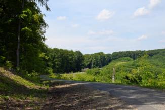 erdészeti út Kiscsehi felé