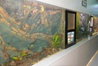 akváriumok Bodorka Balatoni Vízivilág Látogatóközpontban