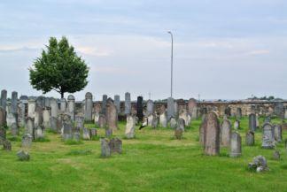 gólya a temetőben