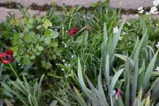 növények az iklódbördőcei gyógynövény- és méztermelőnél