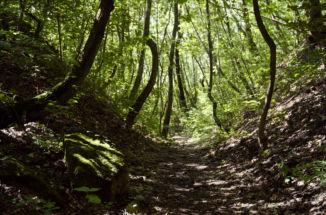 ösvény mohás sziklával