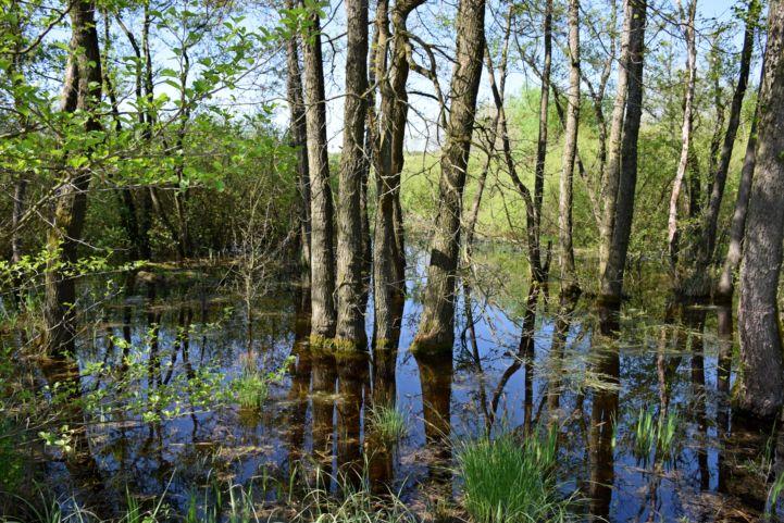 lápos erdő Nagykanizsa külterületén