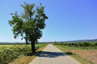 útszakasz Purbach közelében