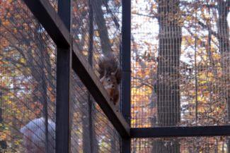 mókus a vadasparkban