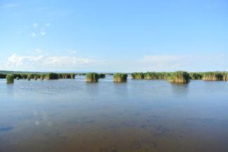 mocsaras területek ölelik körül a tópartra vezető utat