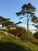 kilátás a vonyarcvashegyi Szent Mihály-domb oldalából