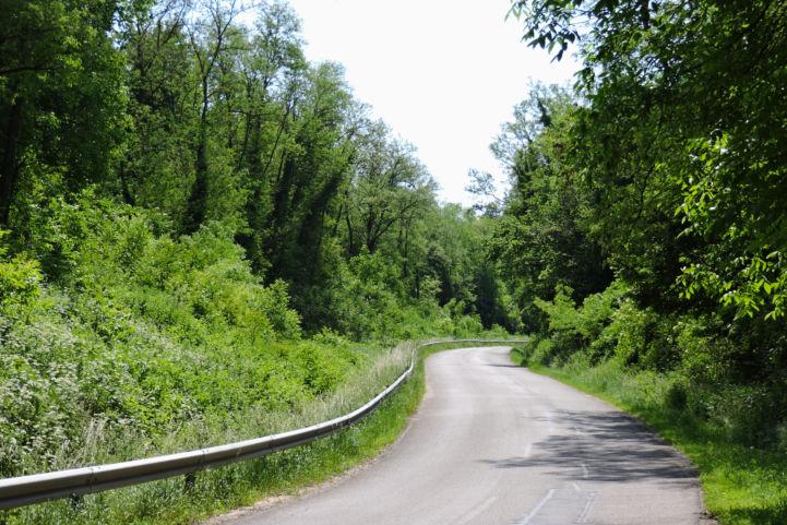 Visz után utunk az erdőt kanyargósan átszelő betonúton vezet