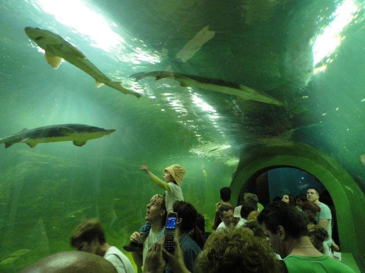 Tisza-tavi Ökocentrum víz alatti alagútja