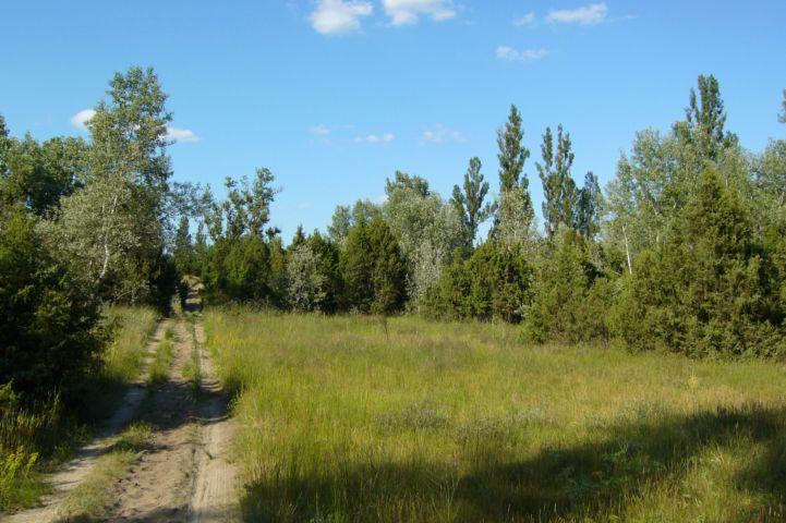 látkép a Csévharaszti Borókás Természetvédelmi Terület mentén a jellegzetes ligetes borókás, fehér nyáras tájon