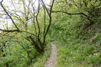 erdei út a Vaskapu-hegy keleti szélén