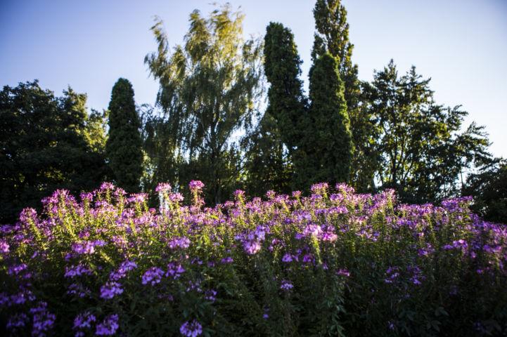 virágok a Gellért-hegyen
