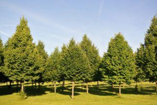 fák ölelik körül a Páneurópai Piknik emlékhelyet