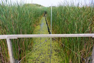 Tisza-tavi Vízi Sétány és Tanösvény - madárháló a gyűrűzéshez