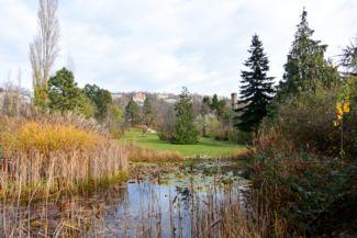 halastó a Budai Arborétumban