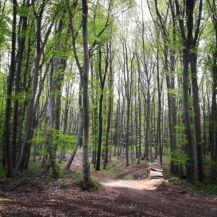 Szilagyi Eszter, Gerecse50: Ébred az erdő (a Cartographia Kupa 2015 fotópályázatából)