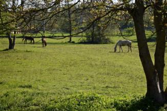 legelésző lovak Zsigárdmajor és Palin között